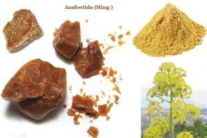 Asafoetida-Ferula-Assa-Foetida-or-Hing