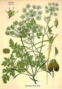 parsli-3