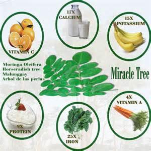 moringa-benefits2